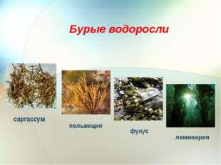 саргассум Бурые водоросли фукус ламинария пельвеция