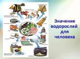 Значение водорослей для человека