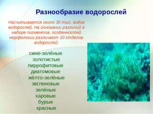 Разнообразие водорослей Насчитывается около 30 тыс. видов водорослей. На осно