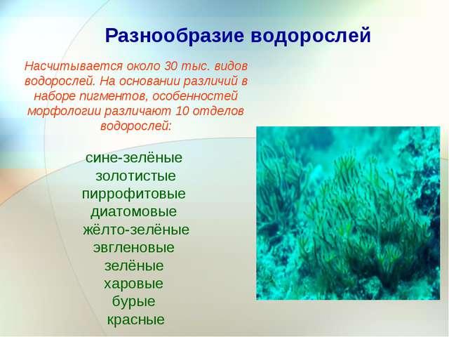 Разнообразие водорослей Насчитывается около 30 тыс. видов водорослей. На осно...
