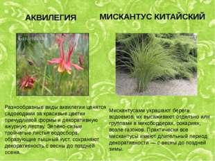 АКВИЛЕГИЯ Разнообразные виды аквилегии ценятся садоводами за красивые цветки