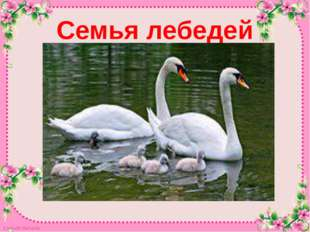 Семья лебедей Кардаева Надежда Кардаева Надежда