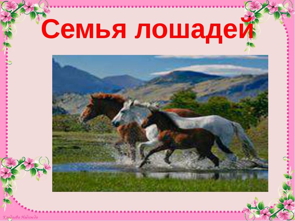 Семья лошадей Кардаева Надежда Кардаева Надежда