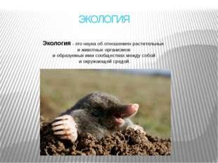 ЭКОЛОГИЯ Экология– это наука об отношениях растительных и животных организмо