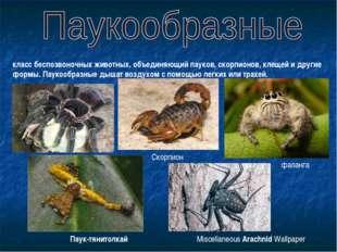 класс беспозвоночных животных, объединяющий пауков, скорпионов, клещей и друг