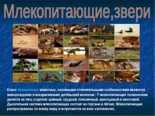 Класс позвоночных животных, основными отличительными особенностями являются ж