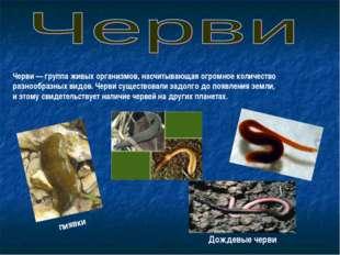 Черви— группа живых организмов, насчитывающая огромное количество разнообраз