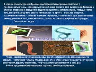 К червям относятся разнообразные двустороннесимметричные животные с продолгов