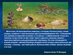 Мягкотелые, тип беспозвоночных животных, к которому относятся улитки, слизни