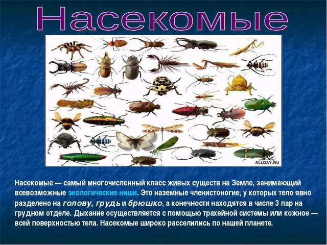 Насекомые— самый многочисленный класс живых существ на Земле, занимающий все...