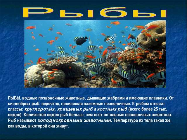 РЫБЫ, водные позвоночные животные, дышащие жабрами и имеющие плавники. От кис...