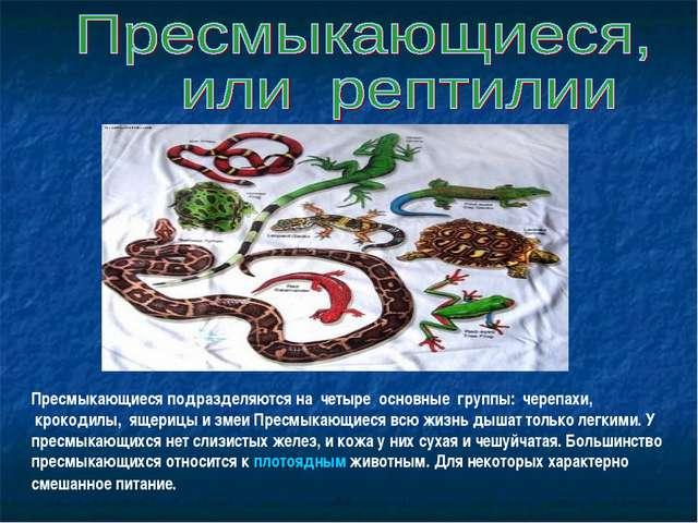 Пресмыкающиеся подразделяются на четыре основные группы: черепахи, кроко...