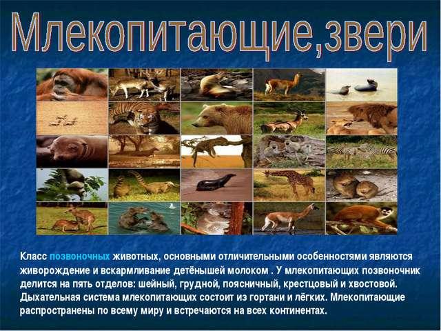 Класс позвоночных животных, основными отличительными особенностями являются ж...