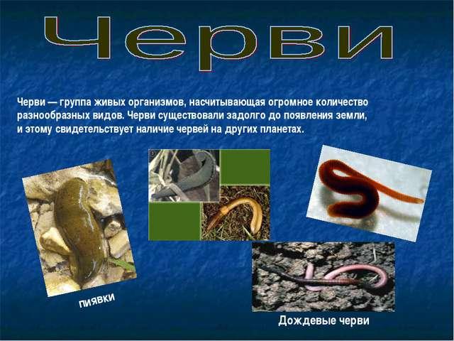 Черви— группа живых организмов, насчитывающая огромное количество разнообраз...