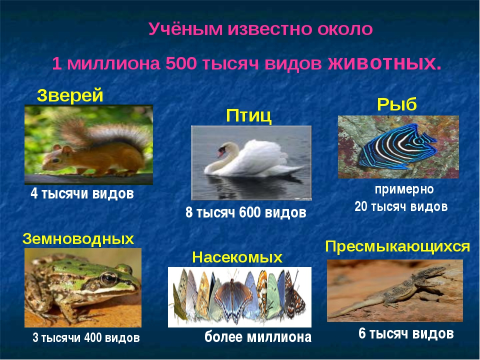 Учёным известно около 1 миллиона 500 тысяч видов животных. Насекомых Рыб Земн...