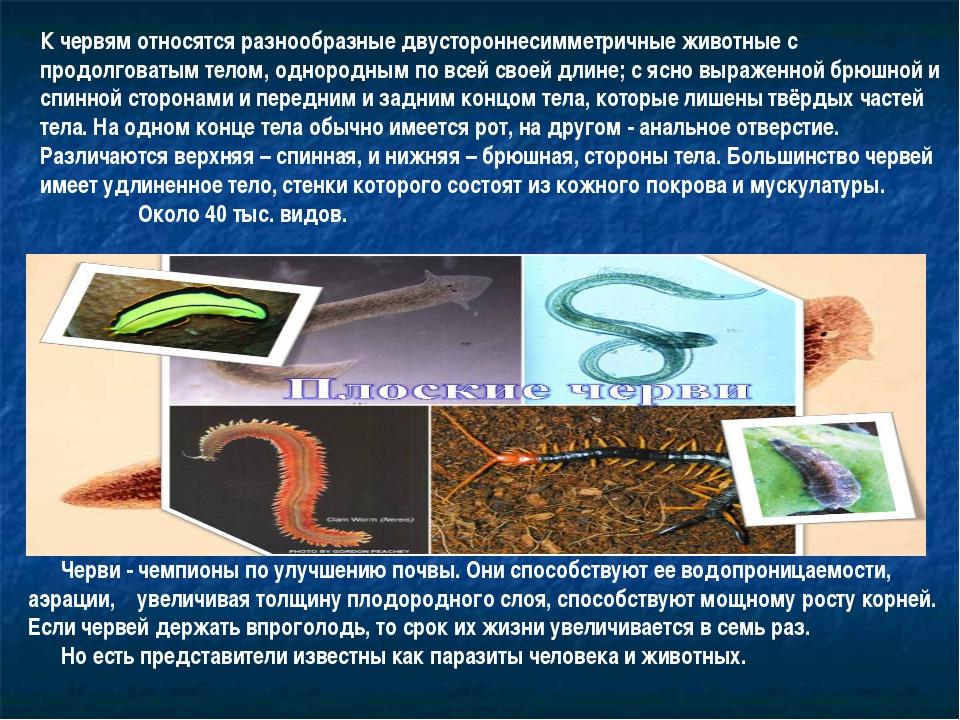 К червям относятся разнообразные двустороннесимметричные животные с продолгов...