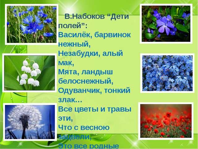 """В.Набоков """"Дети полей"""": Василёк, барвинок нежный, Незабудки, алый мак, Мята,..."""