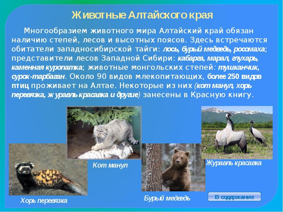 Алтайский край образован 28 сентября 1937, а его столица - город Барнаул в 1...