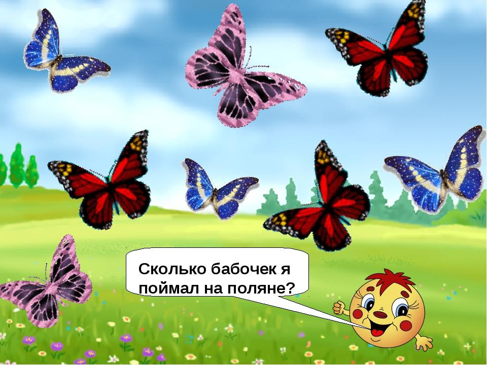 Сколько бабочек я поймал на поляне?