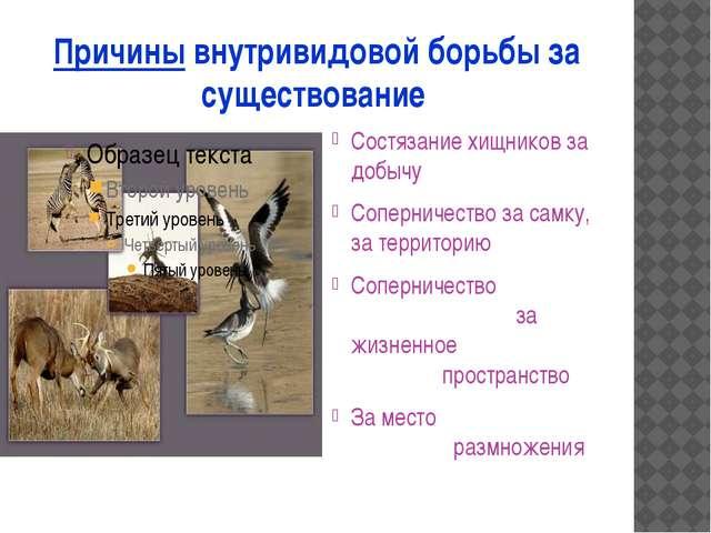 Причины внутривидовой борьбы за существование Состязание хищников за добычу С...