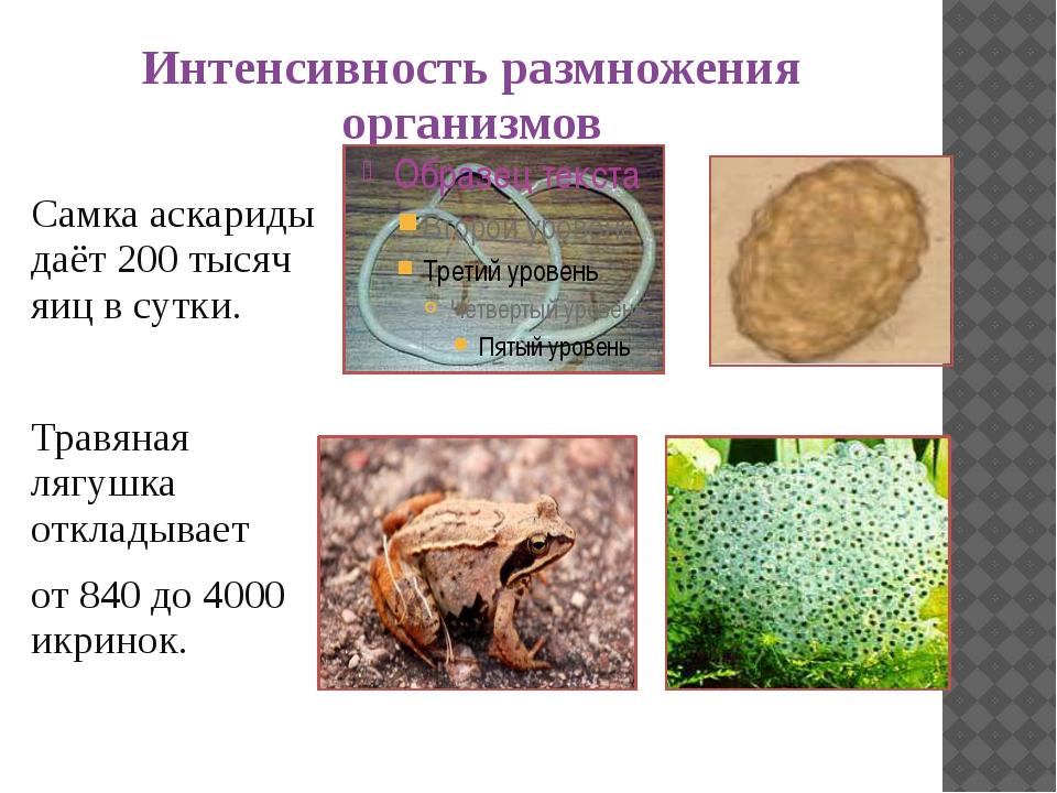 Интенсивность размножения организмов Самка аскариды даёт 200 тысяч яиц в сутк...