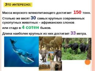 Масса морского млекопитающего достигает 150 тонн. Столько же весят 30 самых