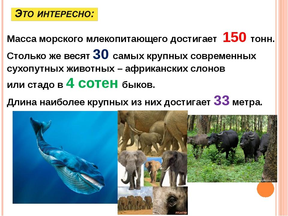 Масса морского млекопитающего достигает 150 тонн. Столько же весят 30 самых...