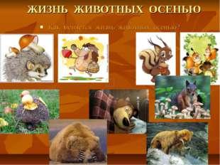 ЖИЗНЬ ЖИВОТНЫХ ОСЕНЬЮ Как меняется жизнь животных осенью?